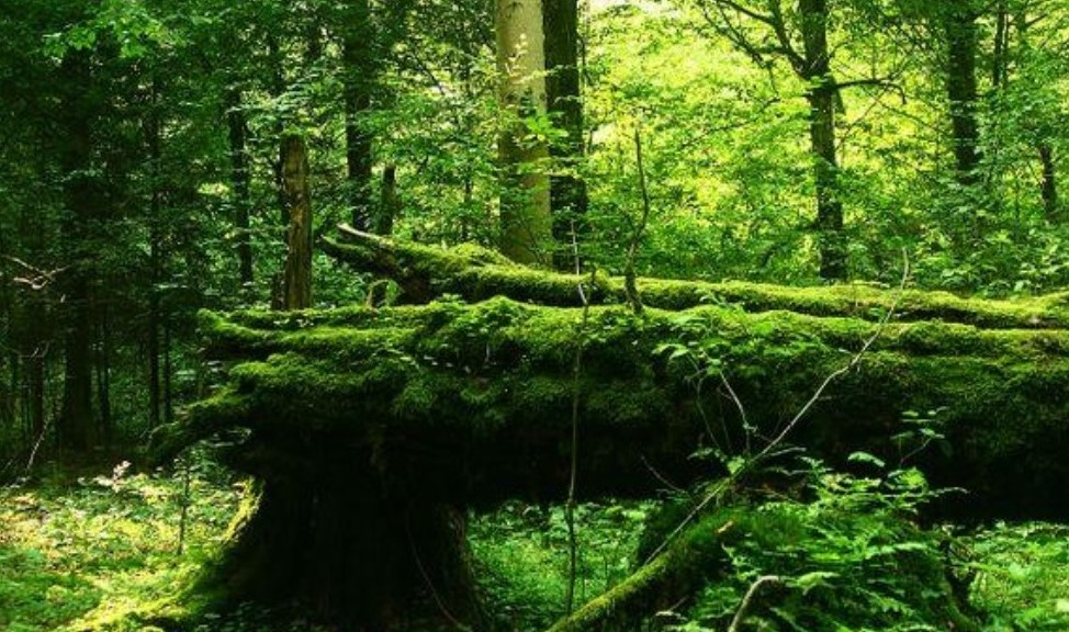 la forêt 2
